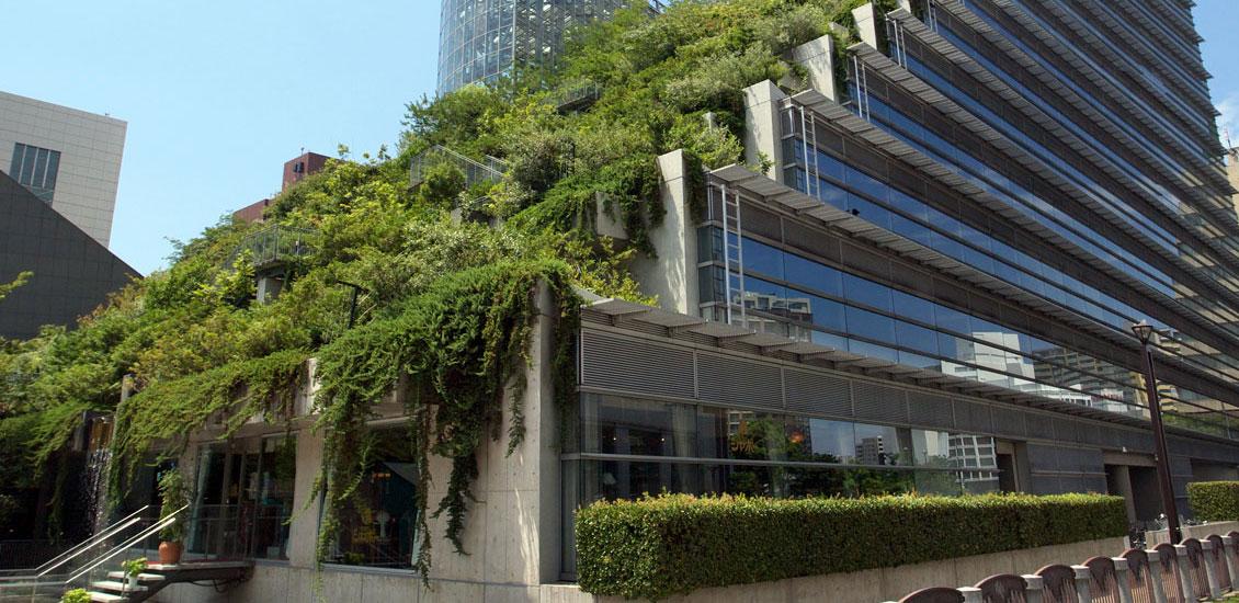 La ciudad de buenos aires pondr techos verdes y jardines for Jardines verticales buenos aires