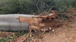 Desmonte ilegal en Santiago del Estero