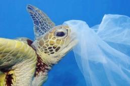 Bolsas biodegradables para enfrentar la contamination de los oceanos con plastico