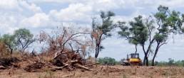 desmontes de bosques nativos en Córdoba
