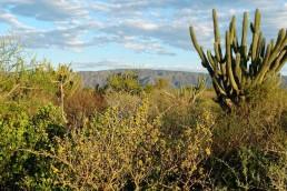 alt=Crearán un nuevo Parque Nacional en Córdoba – cactus
