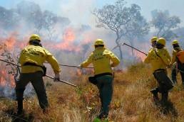 alt=Parque Nacional de la Chapada dos Veadeiros fue consumido por un reciente incendio