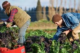 alt=La trasnacional Ebro Foods compro la marca española Vegetalia - cosecha