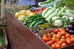 La agroecología prioriza la salud