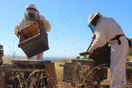 En Córdoba murieron 72 millones de abejas por el uso de agroquímicos.