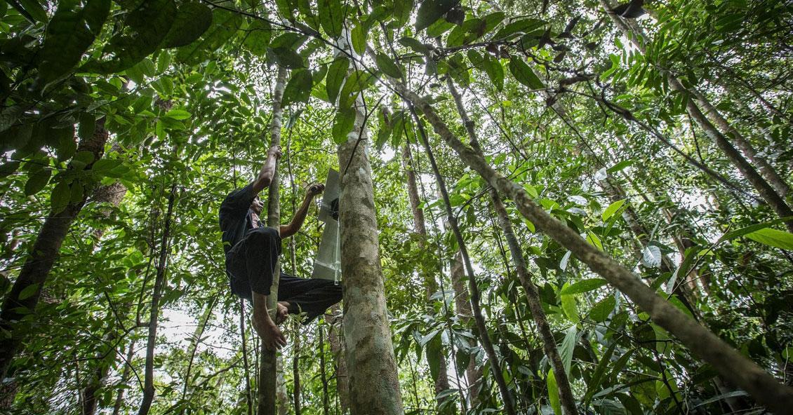 El proyecto consiste en poner en las copas de los árboles celulares viejos, alimentados con paneles solares.