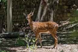 El ex Zoo de Mendoza recibió más de 5000 pedidos de adopción de animales de corral en el proceso de reconversión a Ecoparque.