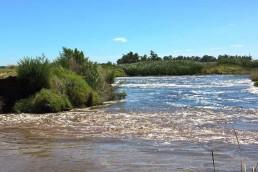 Una investigación en los lagos de la región pampeana arrojó que el 40% de los ecosistemas tiene restos de glifosato.