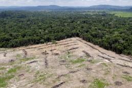 Grupo de colombianos denunció al gobierno por su falta de acción contra la deforestación de la Amazonía.