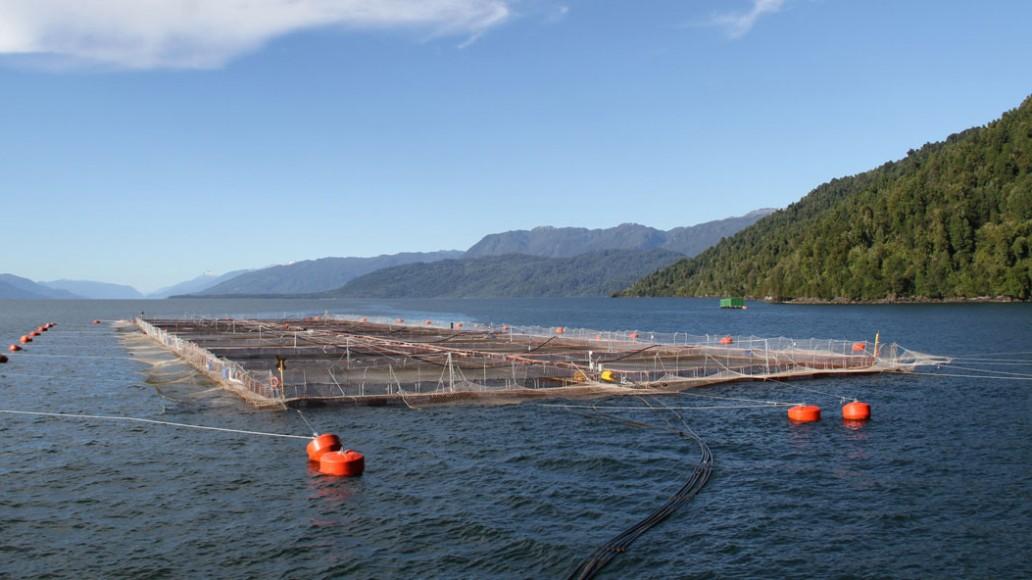 Se firmó un convenio con Noruega para la cría industrial de salmón en jaulas oceánicas.