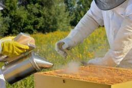 La Unión Europea prohibirá en su totalidad el uso de los pesticidas que están matando millones de abejas e insectos.