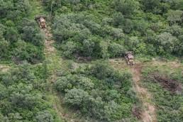 Greenpeace denuncia que el gobierno de Salta quiere legaliza los desmontes que infringen la Ley de Bosques