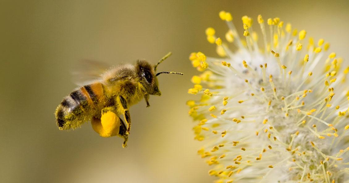 Se redactó un proyecto de ley para promover la biodiversidad en ambientes cultivados