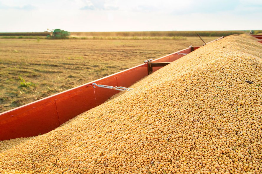 Investigadores determinaron que la soja liberaría grandes cantidades de dióxido de carbono.