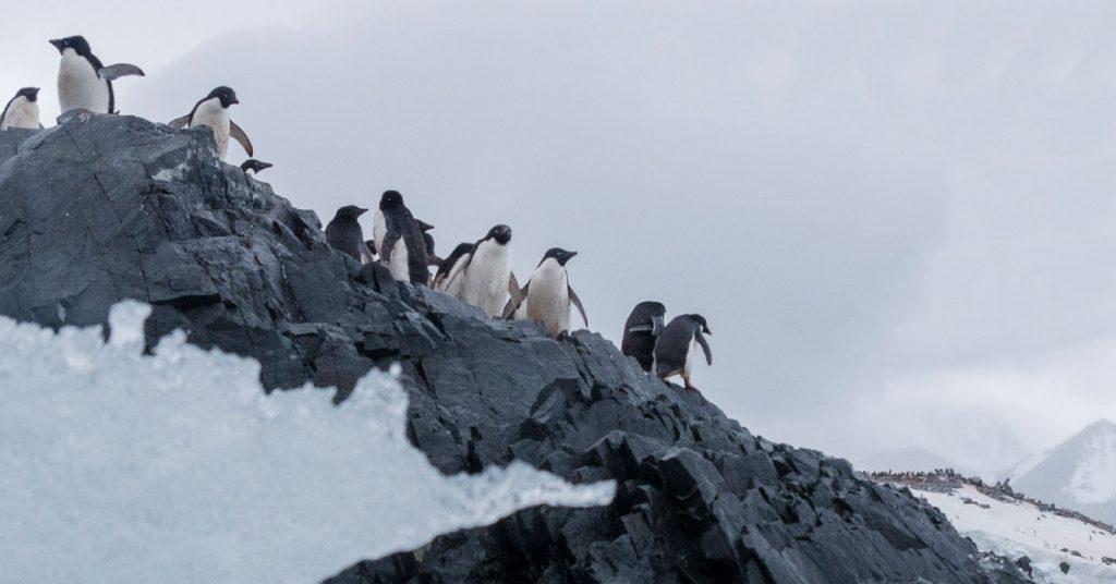 Contaminación en la Antártida, proponen crear un área protegida
