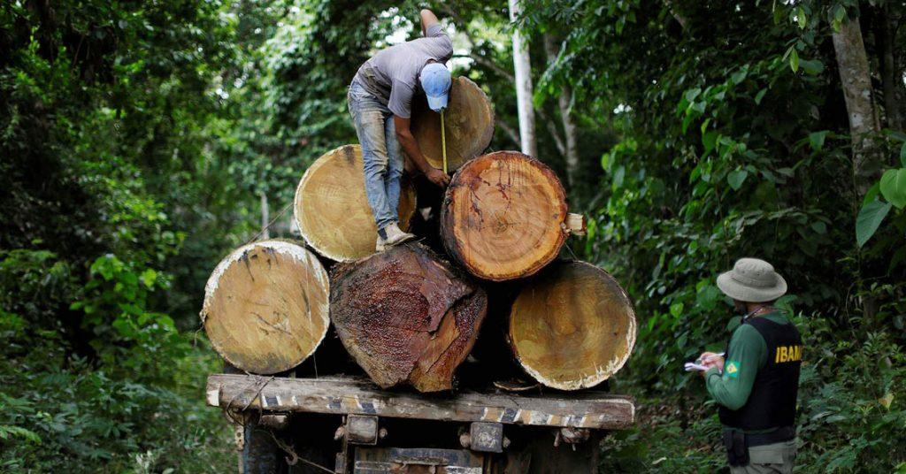 La tala ilegal en la Amazonia de Brasil