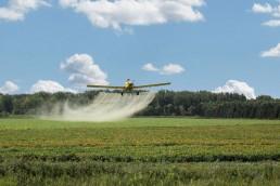 Se destaca la potestad de los Estados locales para legislar sobre la problemática de los agrotóxicos