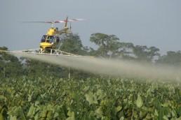 El SENASA propuso aumentar el uso de agroquímicos en algunos cultivos