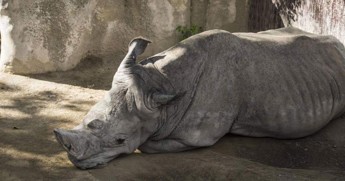 Denuncian penalmente al Ecoparque por la muerte de una jirafa y un rinoceronte