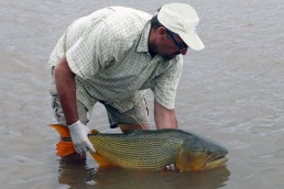 Uruguay. pesticidas en peces de la Cuenca del Plata