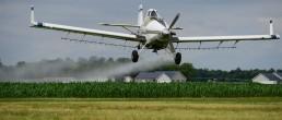clorpirifos uno de los insecticidas más usados en el agro argentino