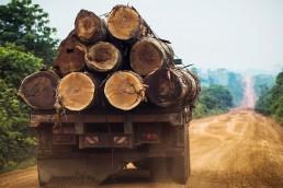 tala ilegal en la Amazonia de Brasil