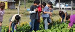 Programa provincial de huertas escolares en misiones
