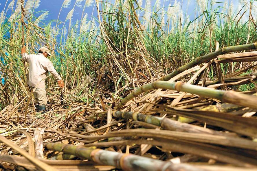 Impulsan el desarrollo de plásticos biodegradables a partir de residuos agroforestales