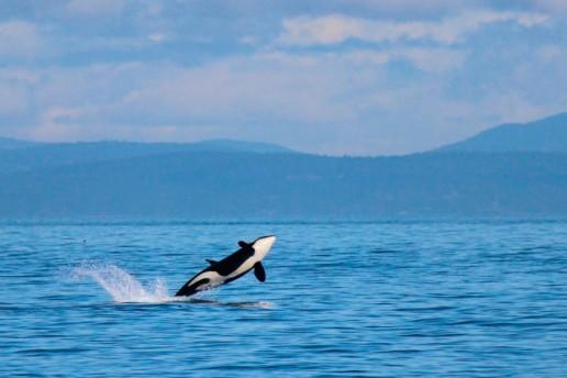 Senadores sancionó la ley que crea las áreas marinas protegidas.