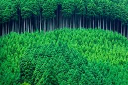 Senadores aprueban prórroga de diez años para la Ley de Promoción Forestal.