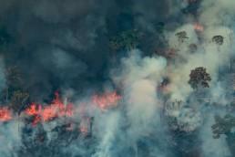 Amazonia en llamas